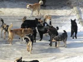Внимание - бродячие собаки!!!!