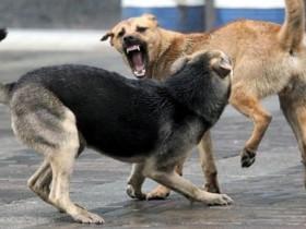 Об ответственности владельцев собак