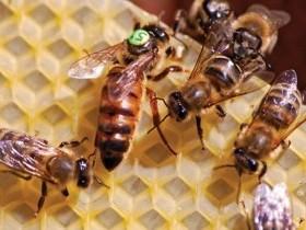 Внимание пчеловодам! Исследование подмора и расплода пчёл.