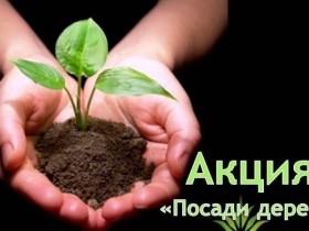 Экологическая акция «Посади дерево» !